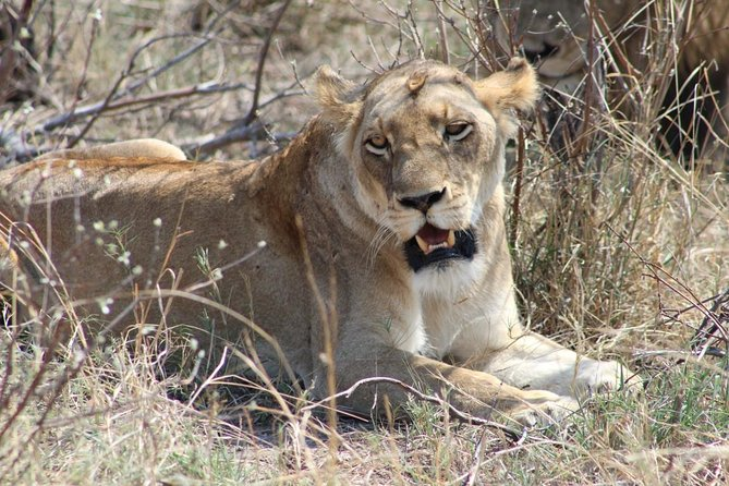 3 Days Kruger National Park Overnight Safaris