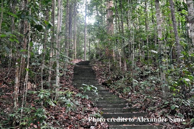 Full Day Sungai Liang Forest Reserve Nature Escapade
