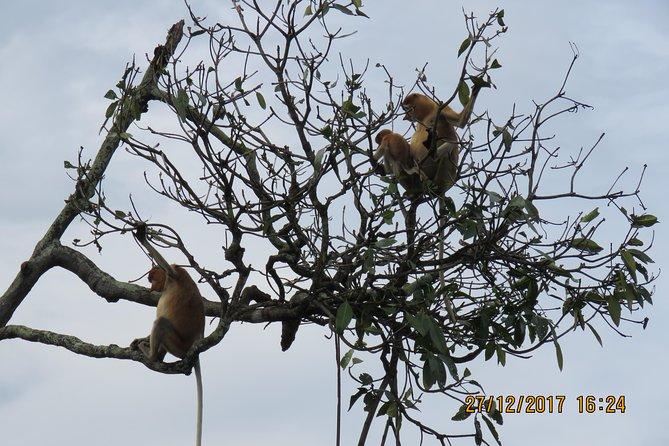 Brunei Proboscis Monkey River Safari with Exclusive Water Village Tour
