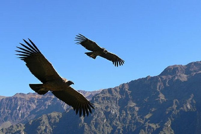 2 days 1 night Colca Canyon tour from Arequipa