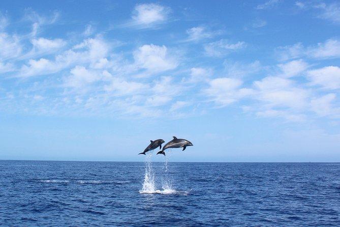 Observação de golfinhos e baleias na Ilha da Madeira