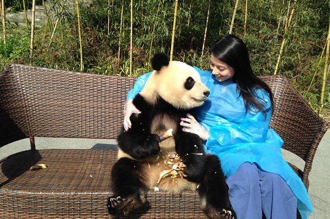 1 Day Panda Volunteer Program Plus Dujiangyan Highlight Private Tour Including Lunch