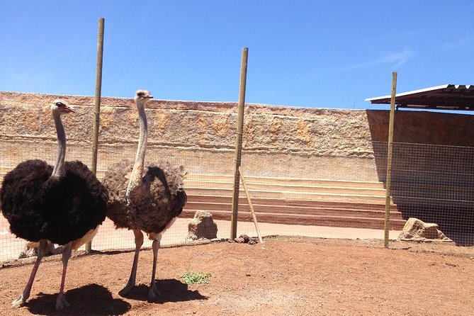 Skip the Line: Ticket to Agüimes Cocodrilo Park Zoo from Gran Canaria photo 8