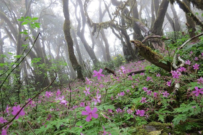 Combined Hiking Route in The Garajonay National Park and La Gomera Ravines