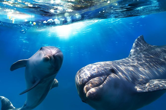 2-Hour Dolphin and Whale Watching in Gran Canaria