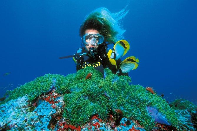 PADI Discover Scuba Diving in Montego Bay