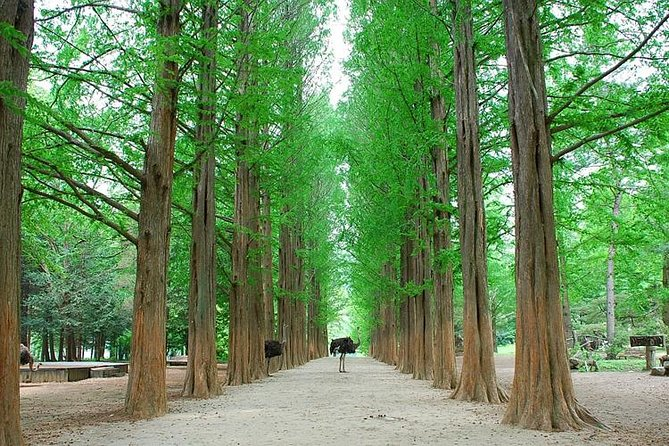 Day tour for Foodies : Nami Island, Petit France and the garden of morning calm