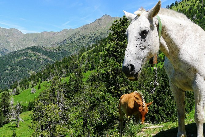 Self-Guided 5-Day Family Tour in the Pyrenees