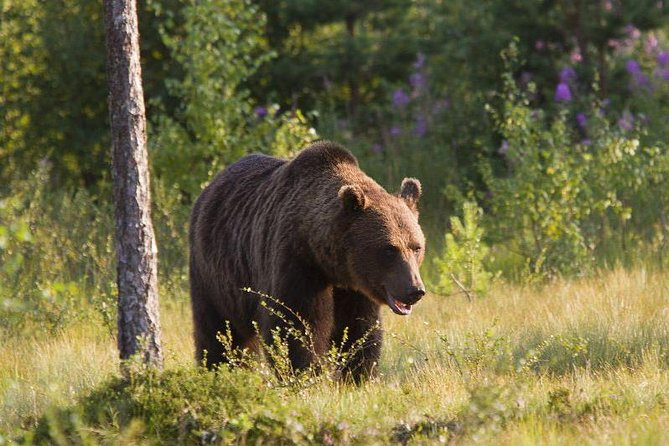Day Private Tour From Bucharest-Bear Sanctuary, Rasnov Fortress and Brasov