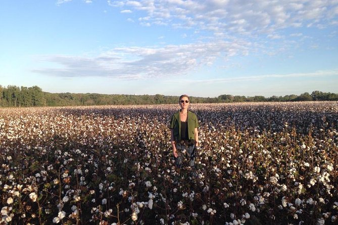 Time to Harvest in the Cotton Field!
