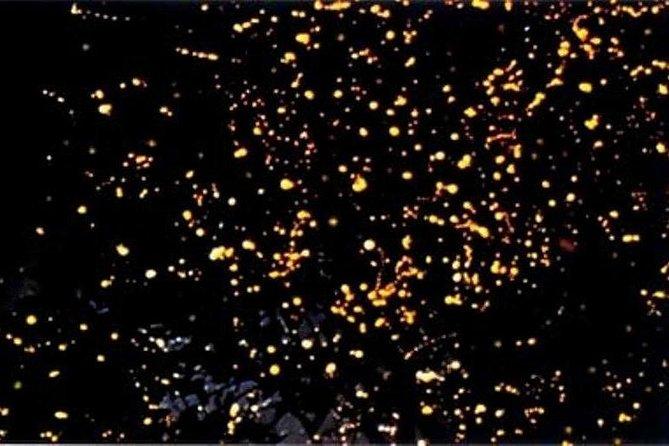 Puerto Princesa Fireflies Watching with Dinner