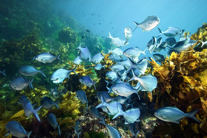 Full-Day Scuba Dive Charter to Hen Island