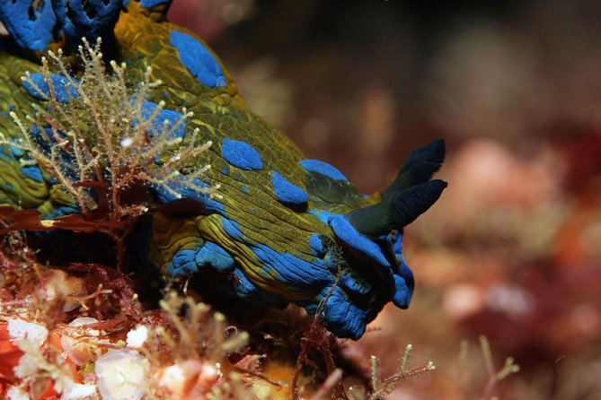 Full-Day Scuba Diving Charter to Goat Island Marine Reserve from Warkworth