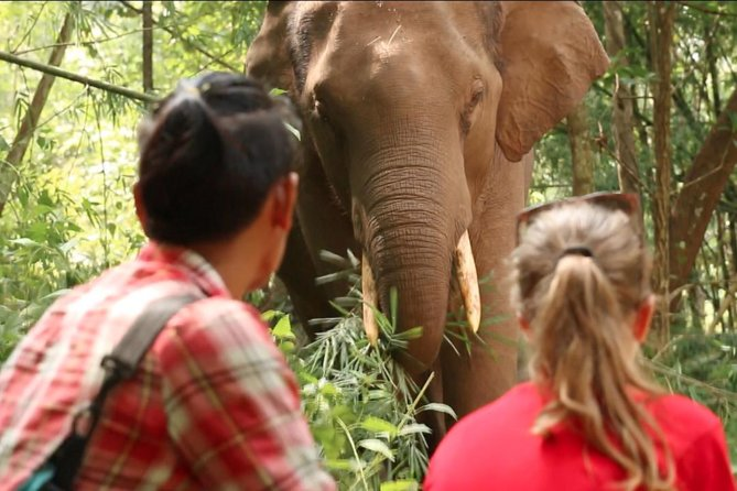 3-Day Kindred Spirit Elephant Sanctuary Chiang Mai