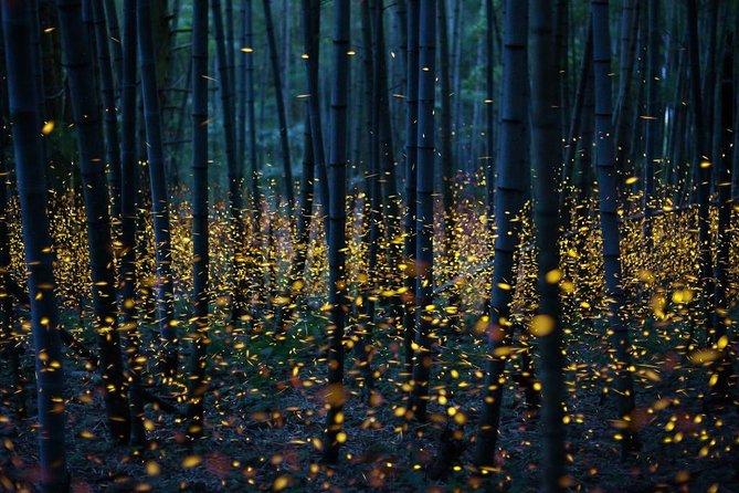 Bamboo Bicycle Tour in twilight: watch dancing Fireflies in Bangkok