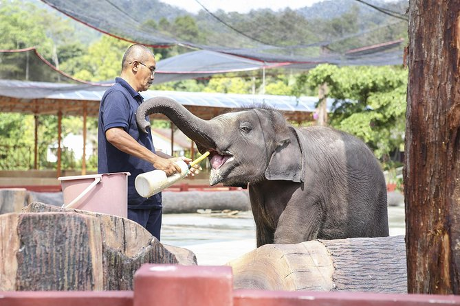 Tour etico guidato privato Kanchanaburi Elephant Sanctuary