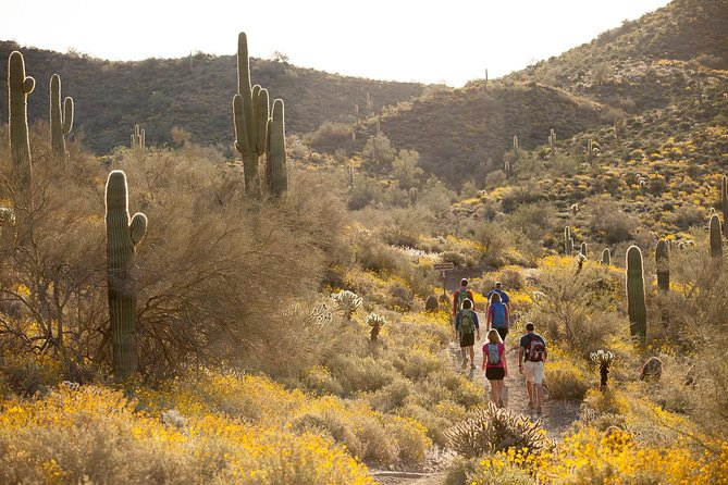 Enjoy the Sonoran Desert by foot!