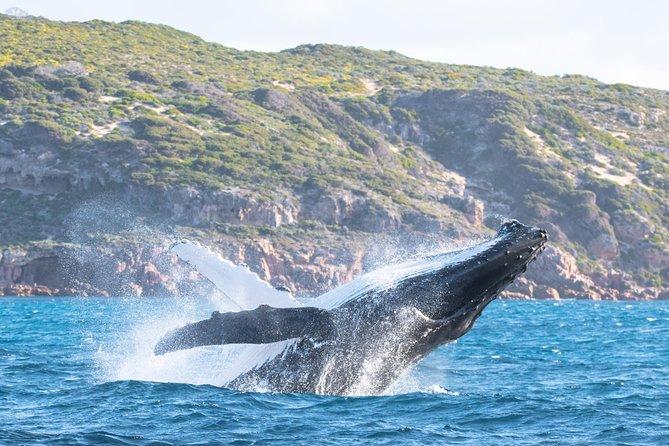 Safari d'observation des baleines en jet-boat depuis Dunsborough