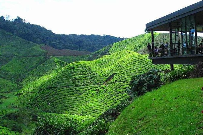 Private Cameron Highlands Day Tour and visit Iskandar Waterfalls