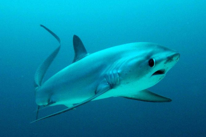 PADI Open Water Course and Thresher Shark Dive