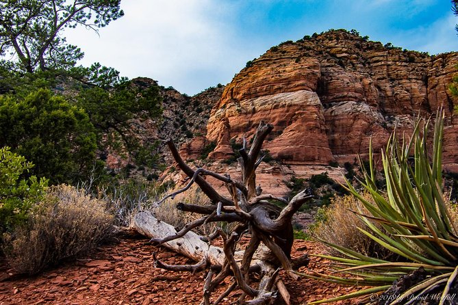 Small-Group Sedona Photography Workshop with Lunch or Dinner