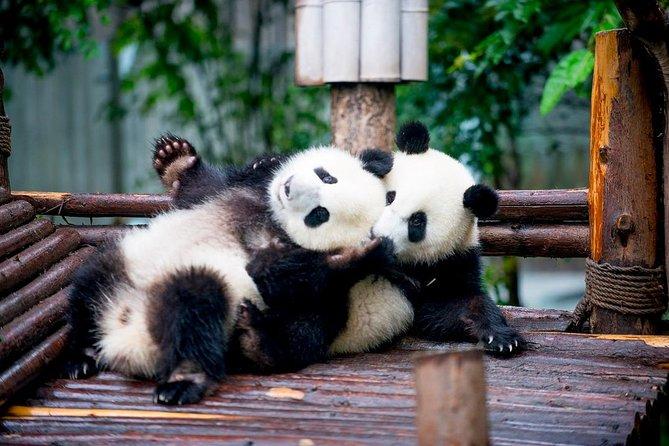 Tour privato di un giorno con panda di Chengdu con due pasti