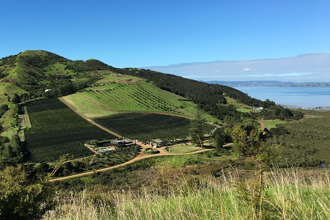 Waiheke Island Vineyards & Bush Walk