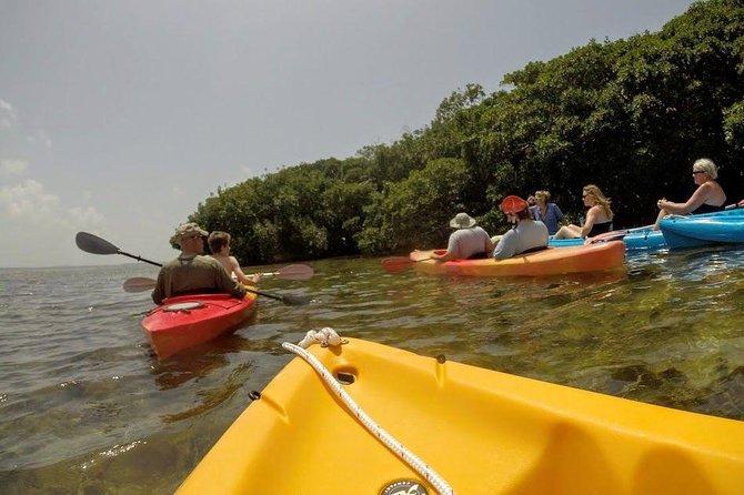 Florida Keys Eco, Paddle, and Snorkel Tour