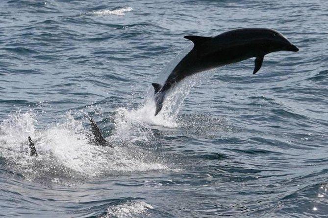 Private Dolphin Cruise