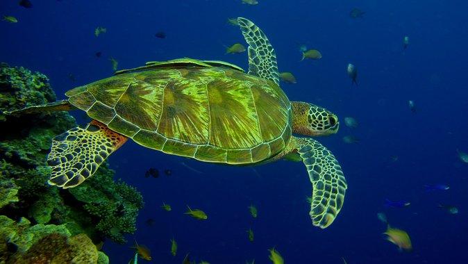 Half-Day Introduction Scuba Dive in Koh Waeo Phuket