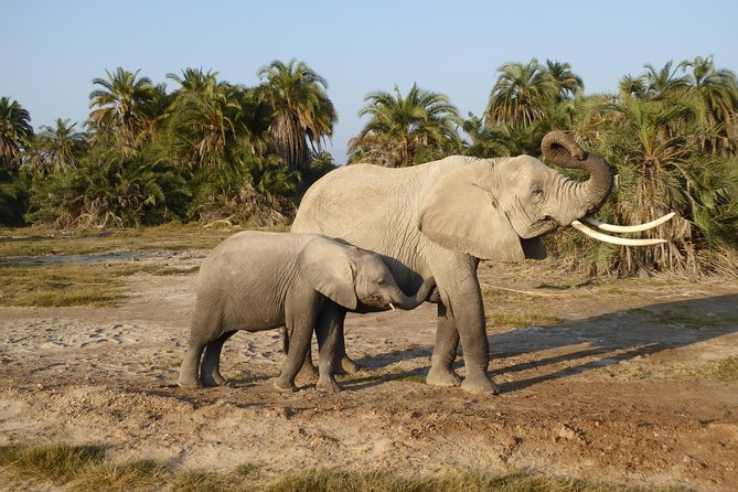 Amboseli National Park Day Tour from Nairobi photo 14