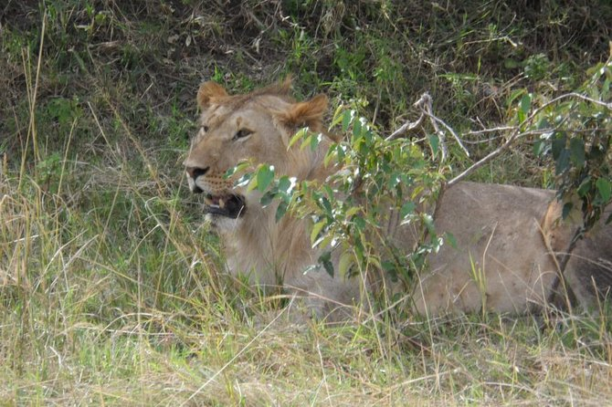 Masai Mara Full Day Tour from Nairobi, Naivasha or Nakuru photo 7
