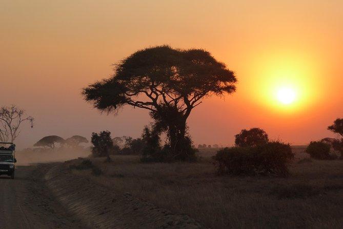 Excursion D'une Demi-journée Au Parc National D'arusha Au Départ De La Ville D'arusha