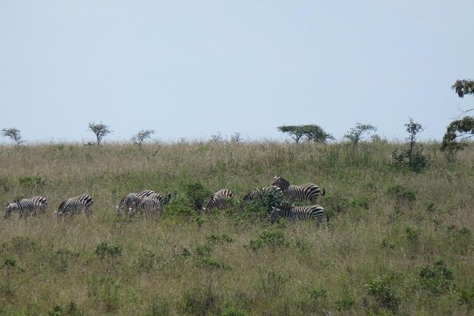 Nairobi National Park, Elephant Orphanage, Giraffe Center,Karen Blixen Day Tour