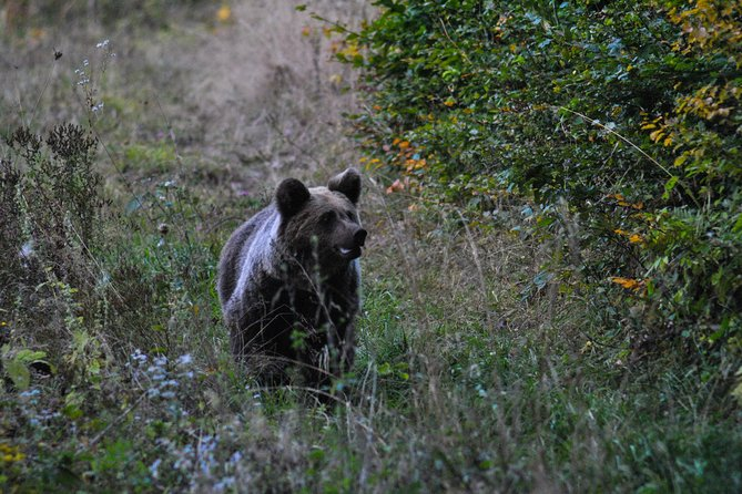 Private Brown Bear Watching Tour