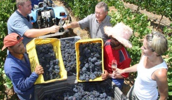 Private Chauffeur Wine Tour from Stellenbosch