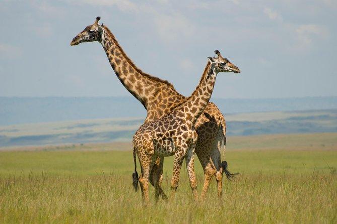 3 Days Masai Mara Group Joining