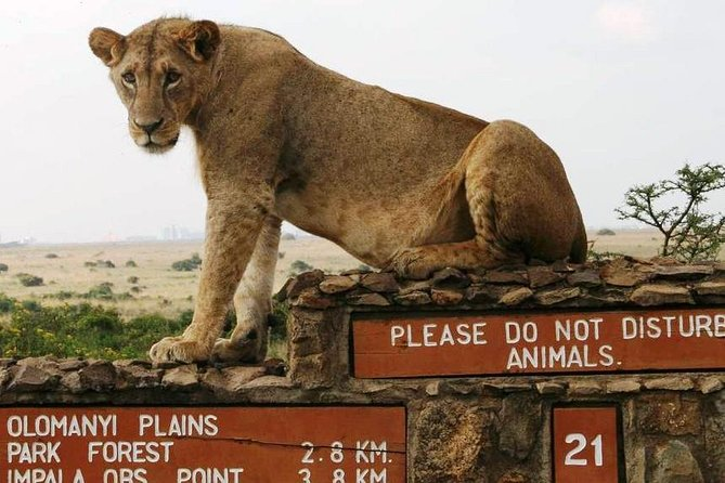 Nairobi National Park, Giraffe Center and Elephant Orphanage Day Tour from Nairobi