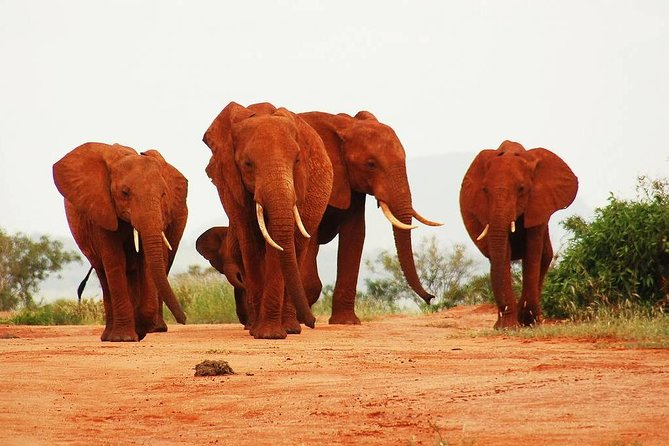 Private 2-Day Tsavo East National Park Safari From Mombasa photo 7
