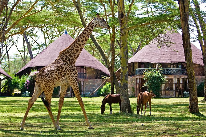 Private 4 Day Lake Naivasha & Masai Mara Luxury Safari
