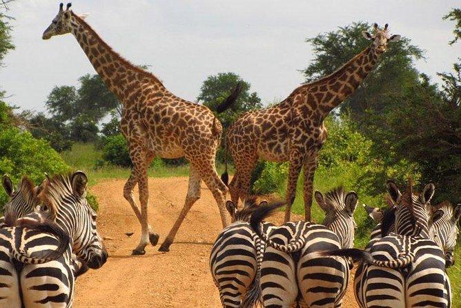 Half a day Nairobi national park and orphanage