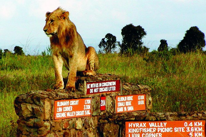 Best Of Nairobi Day Tour Nairobi National park,Elephant ophanarge,Giraffecenter