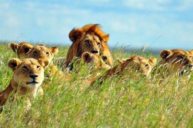 7-Day Breathtaking Kenya Big 5 Private Safari