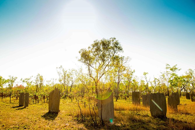 Litchfield National Park Waterfalls Day Trip From Darwin Including Termite Mounds and Lunch