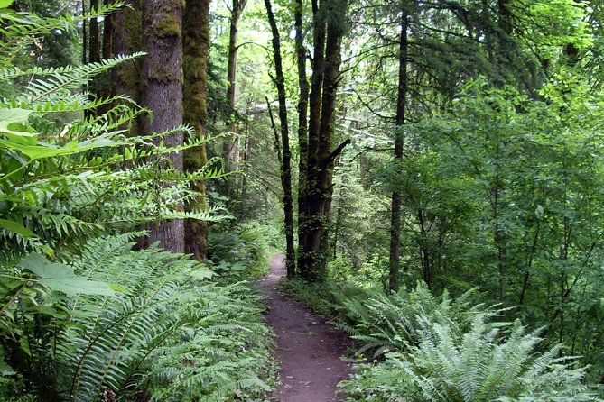 Guided Hike in Portland's Forest Park! (Largest Urban Wilderness in the USA)