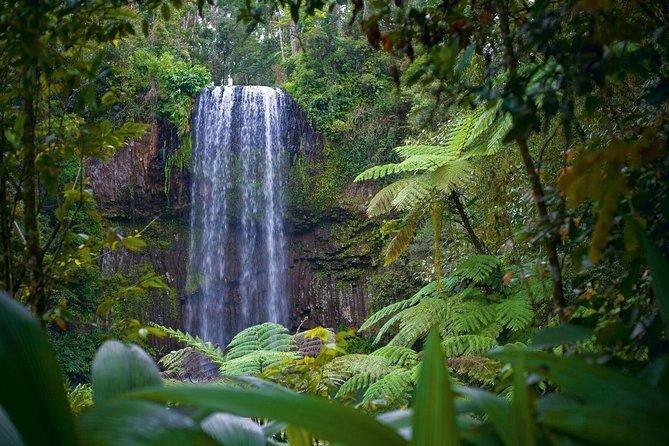 Atherton Tablelands Visite des cascades et de la forêt pluviale au départ de Cairns