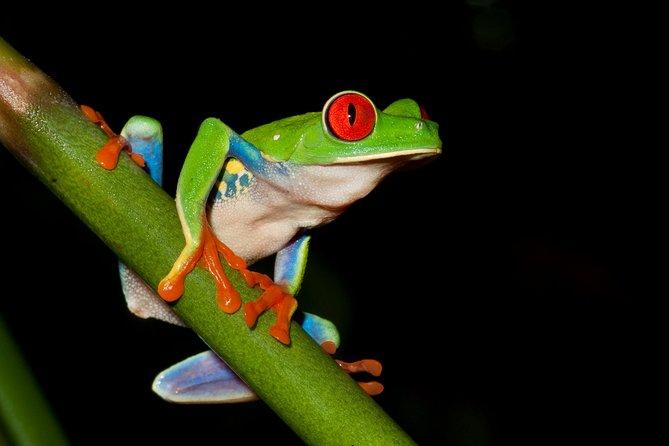 Paseo a pie nocturno por la selva de observación de ranas