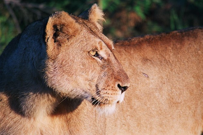 Full Day Kruger National Park Game Drive