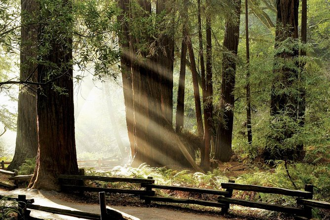 Custom Muir Woods and Napa Wine Tour From San Francisco
