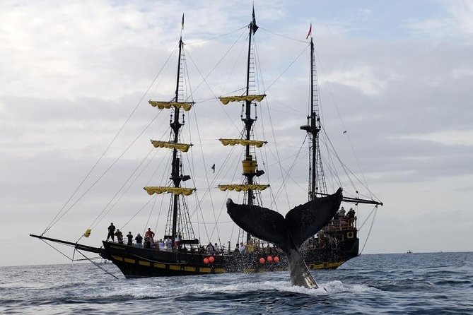 Whale-Watching Pirate Ship Cruise in Los Cabos